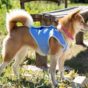 Verkoelend vest voor een kleine hond