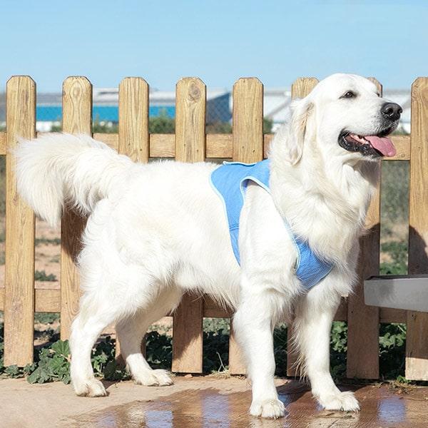 Verkoelend vest voor een grote hond